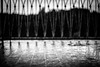 Piove (Pavel 'PAshaRome' Vavilin) Tags: blackandwhite bw monochrome 50mm bokeh m42 manualfocus fifty whiteandblack frommybalcony primelens manuallens pancolar fastlens pancolar1850 ausjena fixlens ddrlens pancolar2 ausjenapancolar1850