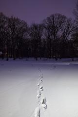 footprints (Satirenoir) Tags: longexposure winter snow alexandria night virginia footprints elementaryschool