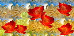 summer impression (HocusFocusClick) Tags: flowers blue red summer abstract art nature field yellow corn flames digitalart creation poppies apophysis impressions hocusfocusclick
