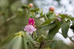 Rombergpark Dortmund (www.andreas-spanjol.de) Tags: zeiss flora nikon natur dortmund 5mm d800 otus rombergpark zf2