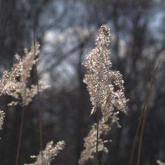 Early spring in Kralingse Bos (sloebertje) Tags: flowers flower macro nature spring rotterdam kralingen kralingsebos kralingseplas