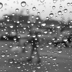 out in the rain (Eric.Ray) Tags: panasonic lumix dmc rain drops black white droplets window focus