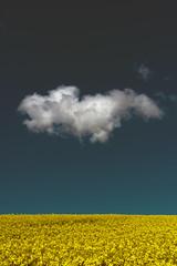 Cloud (arkland_swe) Tags: cloud sky himmel moln skällentorp halland raps ljgrn rapeseed