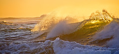 On the crest of a wave (loobyloo55) Tags: yellow sunrise wave australia whitehorses