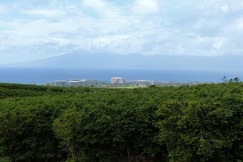 Ka`anapali Coffee estates