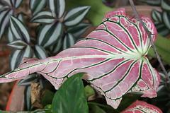 Leaf (Simone Scott) Tags: beauty leaf simone cayman brac caymanbrac stakebay simonescott simonescottcaymanbrac