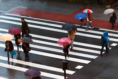 003 (fadercini) Tags: canon eos lluvia d 600 paraguas peatones pasocebra