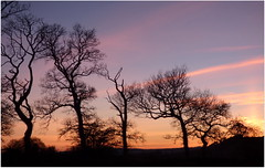 Silhouette Sunset (eric robb niven) Tags: trees sunset tree cycling scotland cyclist dundee silhouettes auchterhouse ericrobbniven lumixfz72
