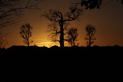 Sunset Silhouette (updownmo) Tags: trees sunset silhouette google explore sunsetglow bexley afterglow welling dansonpark nosun googleimage sunsetsilhouette