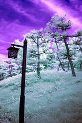 Street Lamp And Pines In Infrared Niigata Park (aeschylus18917) Tags: park trees panorama nature lamp japan pine landscape ir nikon scenery surreal infrared 日本 d200 niigata 松 新潟市 2485mm 赤外線 新潟県 ダニエル danielruyle aeschylus18917 danruyle druyle ルール ダニエルルール