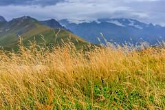 Tall grass on a mountain top (Raoul Pop) Tags: autumn sky plants snow mountains fall colors grass fog clouds austria afternoon altitude horizon dry peaks distance mountaintops osttirol at nearmatrei