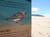 Share the Beach with Birds (Home Land & Sea) Tags: newzealand summer birds sign dunes nz oceanbeach pointshoot sonycybershot hawkesbay protected dotterel sharethebeach homelandsea dschx100v
