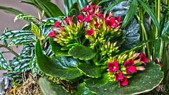 Fleur (R.Didier) Tags: fleur composition bouquet