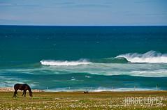Untitled-1 (jopez _fotografia) Tags: sea horse landscape caballo mar spain surf waves wind offshore paisaje viento olas cantabria lineup cantabrico 2016 waveporn jorgelpez cantabriainfinita jopez jopezphotography