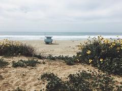 (lumineuseamour) Tags: ocean california beach cali la losangeles lax manhattanbeach vsco iphoneography vscocam vscophile vscogrid iphone6s