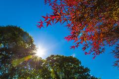 Filtered (aka Buddy) Tags: light sun tree leaves nj og 2016 rumson