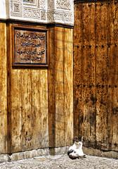 A la salida de misa (mArregui) Tags: cat nikon gato fez mezquita marruecos fes fs marruecosencolores elcolordemarruecos wwwarreguimeluscom marregui