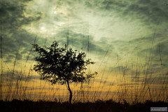 Another view (Anneke Jager) Tags: sunset sky tree canon landscape mood moody outdoor dusk boom gras landschap sfeer annekejager