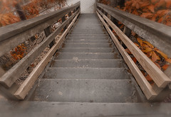 Stairs going down (atitsince82) Tags: california wood bridge red tree philadelphia up leaves yellow fog stairs turn forest landscape hotel wooden stair walk foggy rail down hike grill lobby made trail staircase jungle twig marsh railing turning manufactured