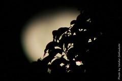 Lua (161) (valdircodinhoto) Tags: brazil sky moon black textura braslia brasil night canon de lens eos rebel noche mar df foto darkness ar natural negro cu preto luna cielo 25 lua noite ao 75300mm minimalismo redondo livre abstrato ceu lunar crculo maio cheia escuro fundo luar brilho oscuro curvas moldura satlite llena 2016 monocromtico serenidade t5i
