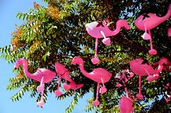 Roosting Flamingos (photographyguy) Tags: colorado denver flamingos birds colfaxave pink tree roosting