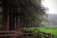 DSCF2304.tif (Ad Sebregts) Tags: forest margriet