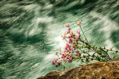 Time Passing (59roadking - Jim Johnston) Tags: flowers light summer sun water river wildflowers 500px ifttt