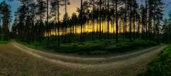 Radweg durch den schwedischen Wald (Kevin Chileong Lee) Tags: panorama sonnenuntergang schweden natur gras grn landschaft wald bume wandern wanderweg kurve strucher sandhem