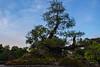Well kept Bonsai (OpersembeArt) Tags: trip blue trees tree green lady contrast canon garden eos pagoda moss sticks vietnamese village vietnam monks bonsai hue bacpacking insense 700d canon700d canoneos700d eos700