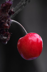 cherry Oh! (Knarfs1) Tags: red tree rot fruit garden cherry garten baum obst kirsche