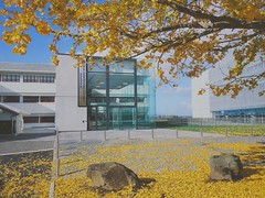 #Waikato#Waikato university # VSCO (loftershen) Tags: waikato universit