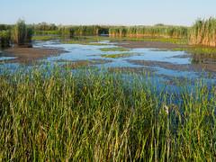 FO160616_6160013.jpg (Fernando Ortega C.) Tags: paisaje humedales ecosistemas deltadeldanubio 00naturaleza 06viajes 2016deltadanubio