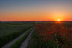 Field of poppies (Mirek Pruchnicki) Tags: road light sunset red sky sun colors field june landscape soft pentax farm maki polska bluesky cereals droga zachód poppys zboża polna województwopodkarpackie wyszatyce żurawica
