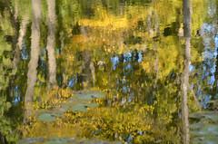 DSC_8125 (Vita_M) Tags: autumn uman reflaction