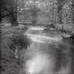Ogden Island - Right Channel (Regular Rod) Tags: trees light blackandwhite sunlight 120 film water monochrome river fishing woods shadows derbyshire peakdistrict flyfishing bakewell semistand 510pyro ysplix rnbderbyshirewye derbyshirewye