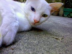 cat hitting rock bottom (mikeeliza) Tags: street blue white kite green cat big eyes alley chat may ears whiskers gato manila gata cath gatto kats kass katt kato miu felis kissa ket pusa gati meo cattus maow chatz catua ikati mikeeliza