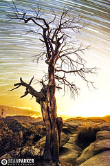 Star Trail Of Life (Sean Parker Photography) Tags: arizona sky night stars tucson az astro astrophotography astronomy treeoflife startrails astrophoto startrail