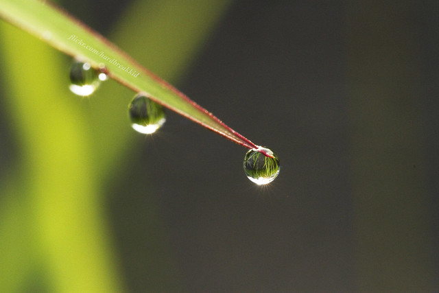 Morning Dew......