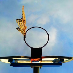baseball fan basket (aakanayev) Tags: abstract calgary basketball cellphone minimal