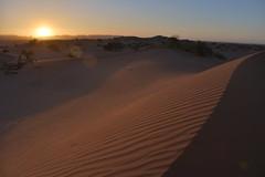 Sunset in the desert (George Pachantouris) Tags: africa night desert market north el palm morocco marrakech souk medina marrakesh bazaar zagora fna jamaa ouarzazarte