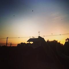 good morning bkk : สวัสดีวันศุกร์ ตื่นเช้ามาดักนกได้สองตัว เวลาเหลือ
