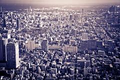 Bruised Tokyo