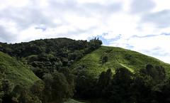 BOH Tea Plantation (sleepyhead's) Tags: highlands tea cameron malaysia cameronhighlands boh plantations teaplantations pahangdarulmakmur bohplantations sungaipalasbohteaplantation sungaipalasboh