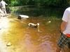 07-01-2012GreatBrookFarm006