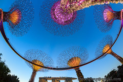 Gardens by the Bay South sunset Aug '13 (knowenoughhappy) Tags: blue sunset gardens by marina bay twilight singapore south august hour aug sands 2013