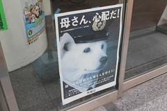 dogs japan tokyo akihabara policedog