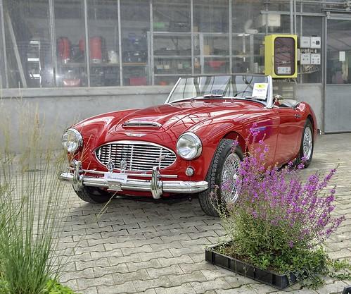 Austin Healey MK1  Jg. 1960