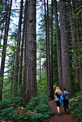 Silver Falls Hike (spollock61) Tags: trees usa green nature beauty grass oregon sisters outdoors silverton wildlife hike pacificnorthwest silverfalls ferns