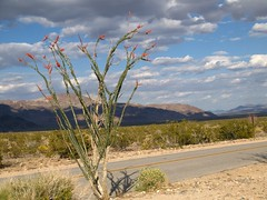 (dkrish) Tags: california landscape olympus zuiko evolt joshuatreenationalpark e330 1454mmf2835