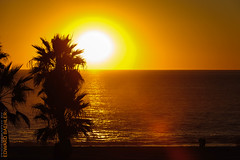Playa del Rey (Edi Bähler) Tags: california sunset sea portugal nature strand losangeles meer sonnenuntergang natur waters lissabon dramaticsky palme pazifik gewässer vereinigtestaaten 2470mmf28 nikond3s losangelesusalm